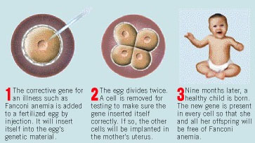 germ line therapy (3) future clinical application of human germline genome editing should   germline ethics society gene therapy human genome eugenics.